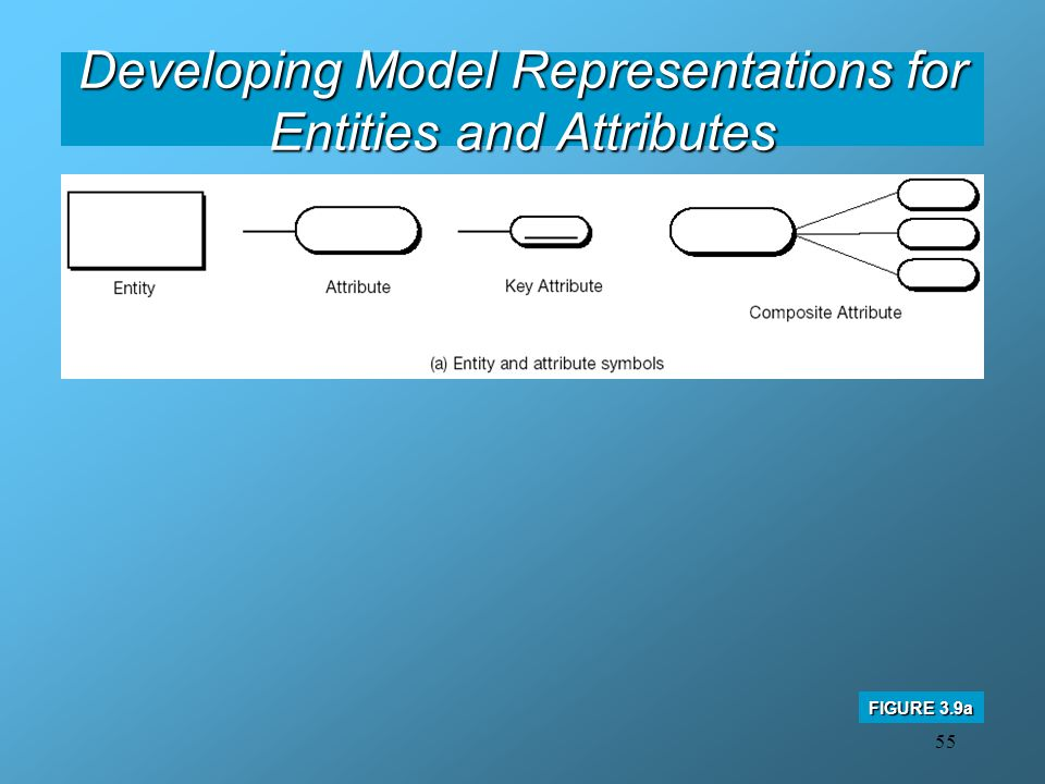 55 Developing Model Representations for Entities and Attributes FIGURE 3.9a