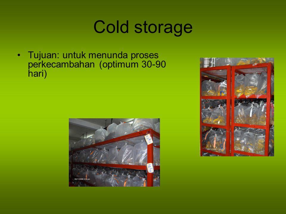 Cold storage Tujuan: untuk menunda proses perkecambahan (optimum 30-90 hari)