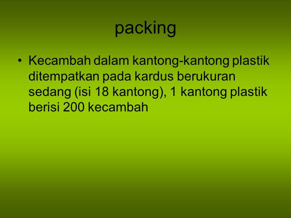 packing Kecambah dalam kantong-kantong plastik ditempatkan pada kardus berukuran sedang (isi 18 kantong), 1 kantong plastik berisi 200 kecambah