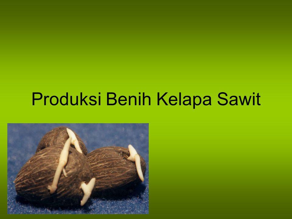 Tahapan Kegiatan Produksi benih Kegiatan di lapangan Kegiatan di pabrik Analisa tandan