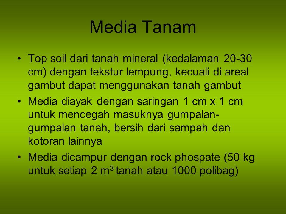 Media Tanam Top soil dari tanah mineral (kedalaman 20-30 cm) dengan tekstur lempung, kecuali di areal gambut dapat menggunakan tanah gambut Media diayak dengan saringan 1 cm x 1 cm untuk mencegah masuknya gumpalan- gumpalan tanah, bersih dari sampah dan kotoran lainnya Media dicampur dengan rock phospate (50 kg untuk setiap 2 m 3 tanah atau 1000 polibag)