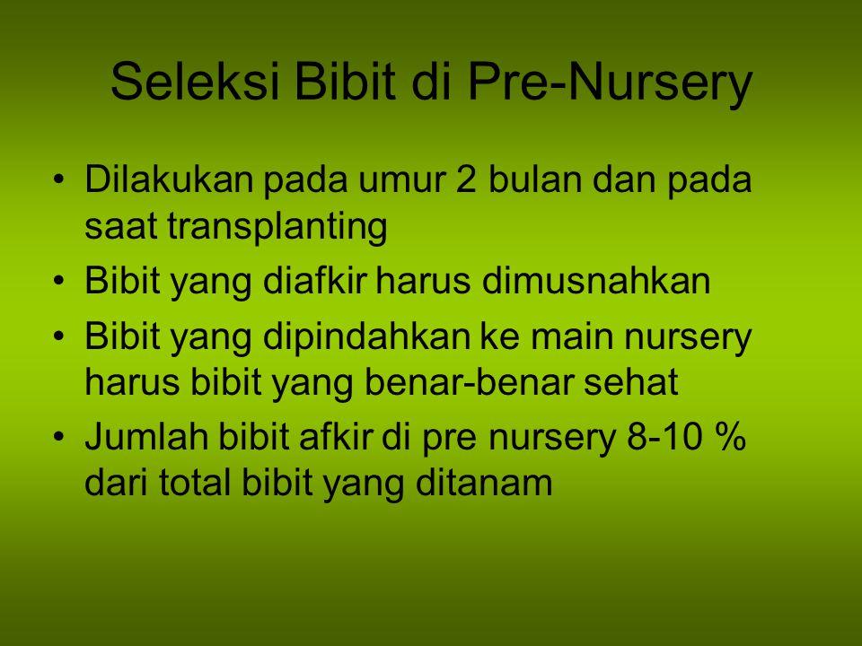 Seleksi Bibit di Pre-Nursery Dilakukan pada umur 2 bulan dan pada saat transplanting Bibit yang diafkir harus dimusnahkan Bibit yang dipindahkan ke main nursery harus bibit yang benar-benar sehat Jumlah bibit afkir di pre nursery 8-10 % dari total bibit yang ditanam
