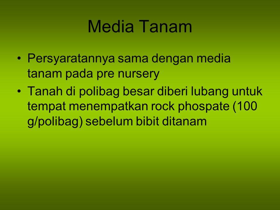 Media Tanam Persyaratannya sama dengan media tanam pada pre nursery Tanah di polibag besar diberi lubang untuk tempat menempatkan rock phospate (100 g/polibag) sebelum bibit ditanam