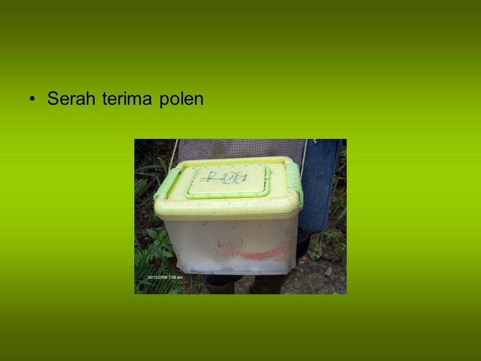Pengisian Polibag Polibag harus sudah siap diisi tanah minimal 4 minggu sebelum pemindahan bibit dari pre-nursery, dengan tujuan untuk mendapatkan tingkat kepadatan tanah yang stabil setelah dilakukan penyiraman setiap hari