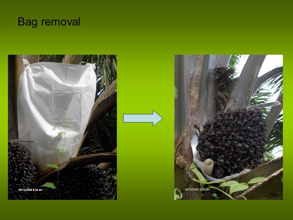 Bag removal