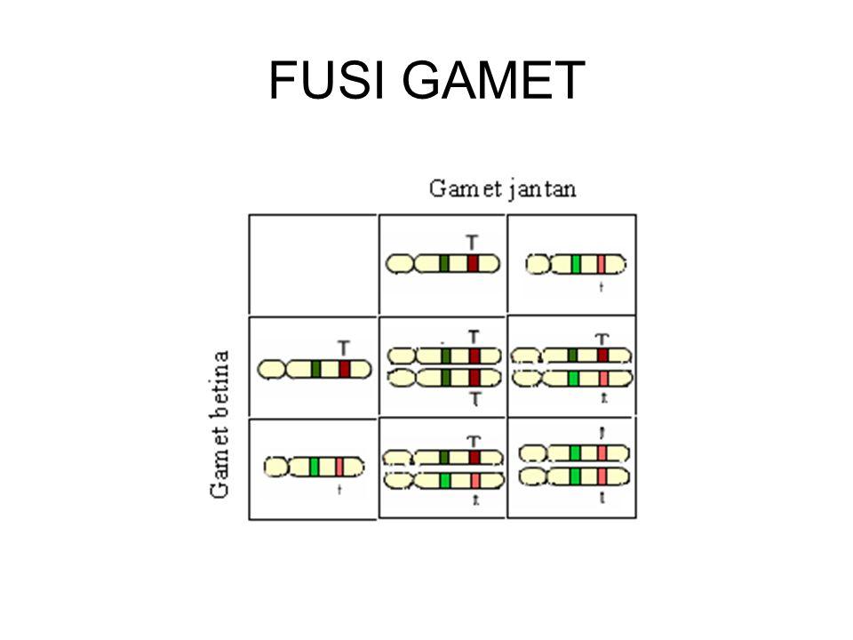 FUSI GAMET