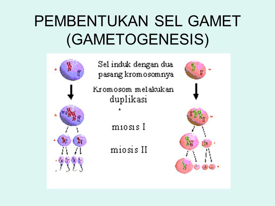 GAMETOGENESIS GAMET JANTANGAMET BETINA