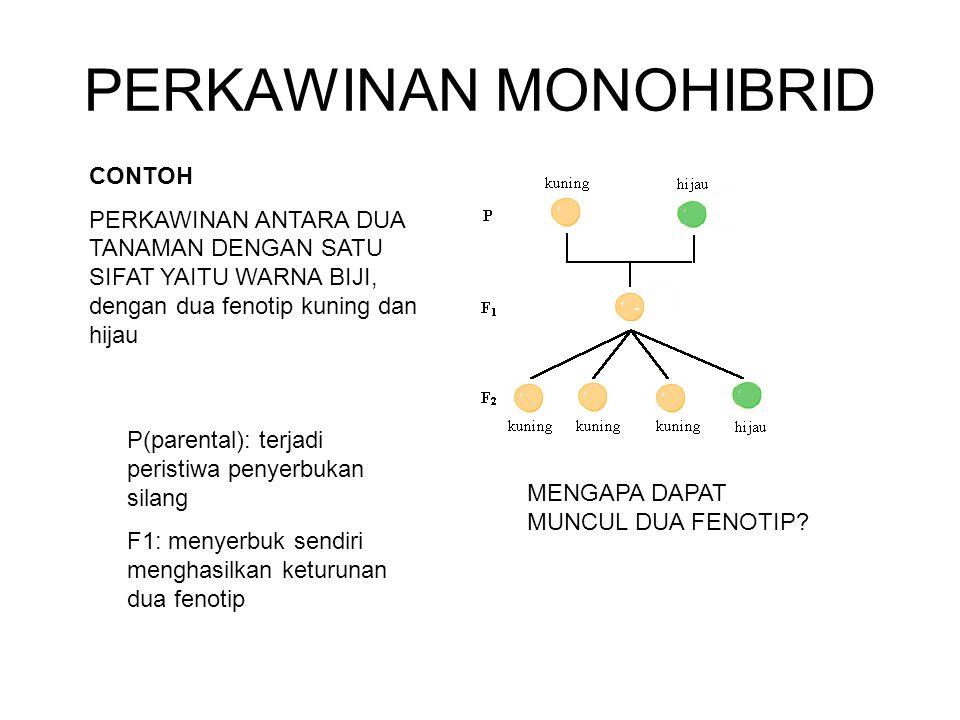 PERKAWINAN MONOHIBRID CONTOH PERKAWINAN ANTARA DUA TANAMAN DENGAN SATU SIFAT YAITU WARNA BIJI, dengan dua fenotip kuning dan hijau P(parental): terjad