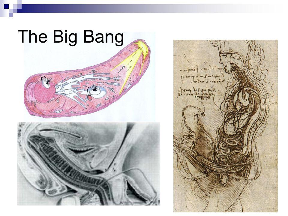 מסת התאים הפנימית יוצרת שני חללים:  שק החלמון  חלל מי השפיר בבני-אדם, משק החלמון מתפתחים תאי הדם ותאי המין בחלל מי השפיר צף העובר.