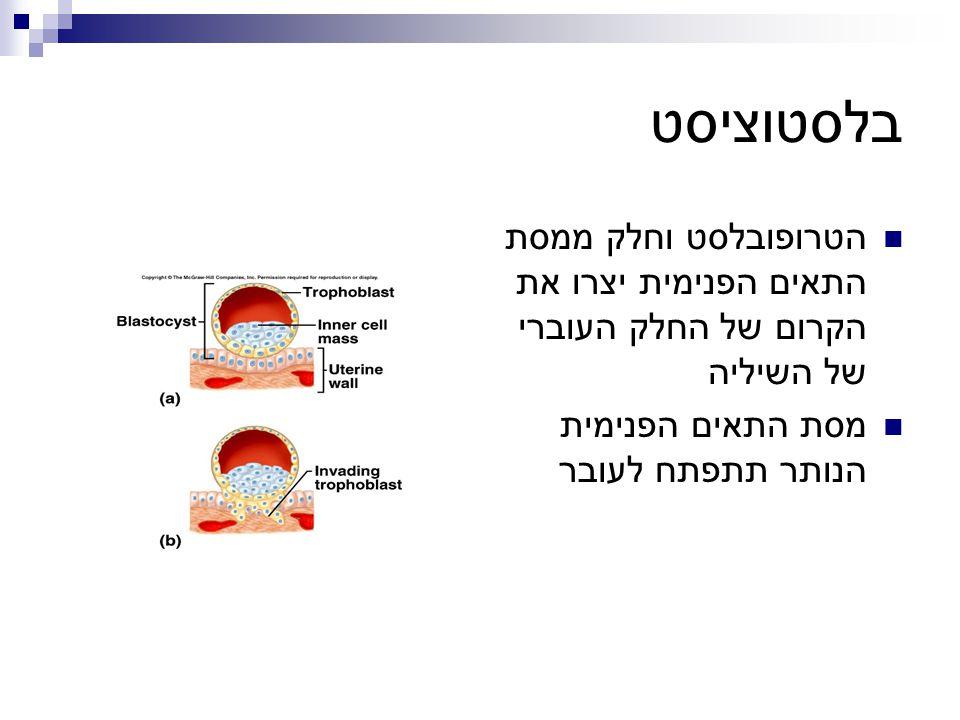 בלסטוציסט הטרופובלסט וחלק ממסת התאים הפנימית יצרו את הקרום של החלק העוברי של השיליה מסת התאים הפנימית הנותר תתפתח לעובר