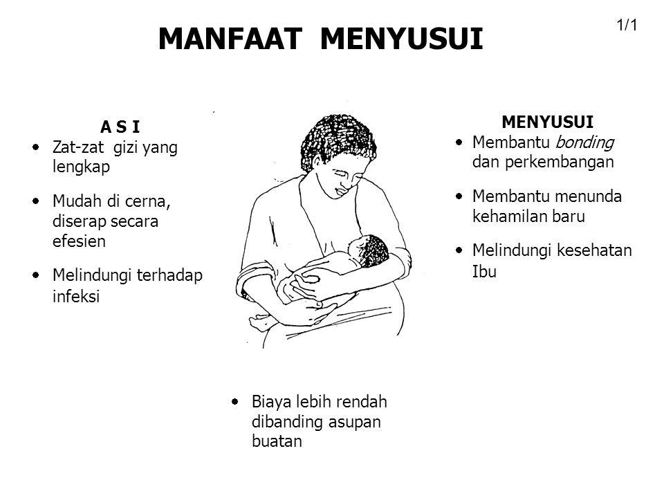 A S I  Zat-zat gizi yang lengkap  Mudah di cerna, diserap secara efesien  Melindungi terhadap infeksi MENYUSUI  Membantu bonding dan perkembangan  Membantu menunda kehamilan baru  Melindungi kesehatan Ibu  Biaya lebih rendah dibanding asupan buatan MANFAAT MENYUSUI 1/1