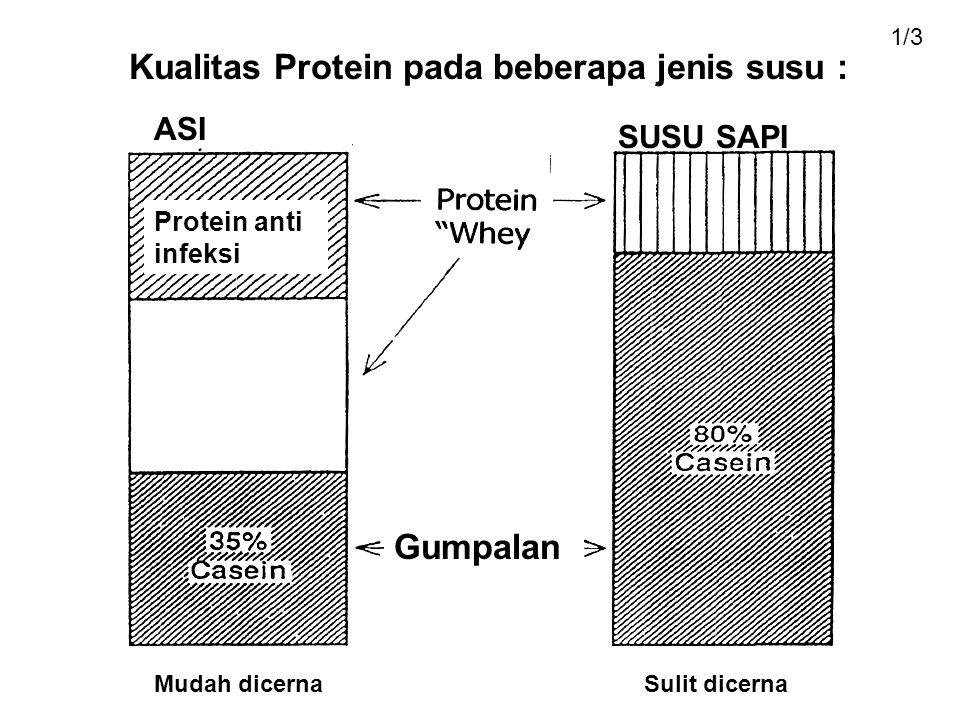 Kualitas Protein pada beberapa jenis susu : ASI SUSU SAPI Protein anti infeksi Gumpalan Mudah dicernaSulit dicerna 1/3