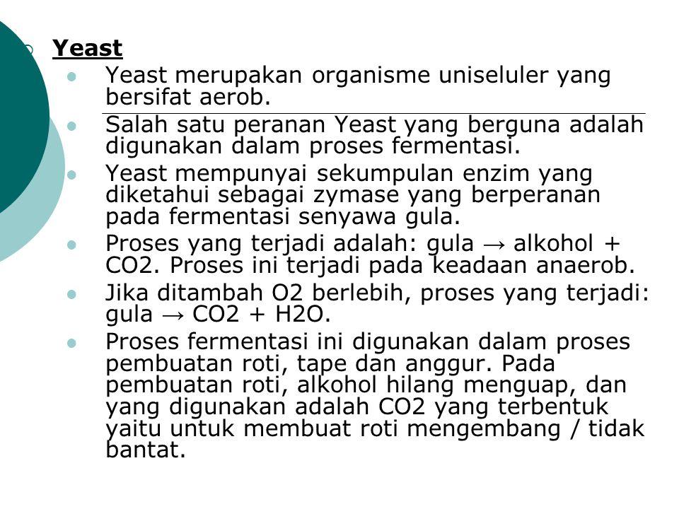  Yeast Yeast merupakan organisme uniseluler yang bersifat aerob. Salah satu peranan Yeast yang berguna adalah digunakan dalam proses fermentasi. Yeas