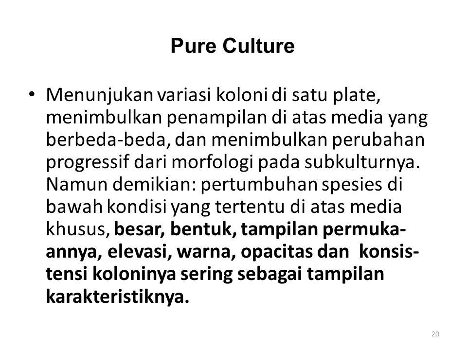 Pure Culture Menunjukan variasi koloni di satu plate, menimbulkan penampilan di atas media yang berbeda-beda, dan menimbulkan perubahan progressif dar