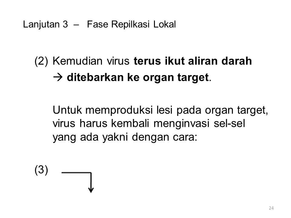 Lanjutan 3 – Fase Repilkasi Lokal (2)Kemudian virus terus ikut aliran darah  ditebarkan ke organ target.