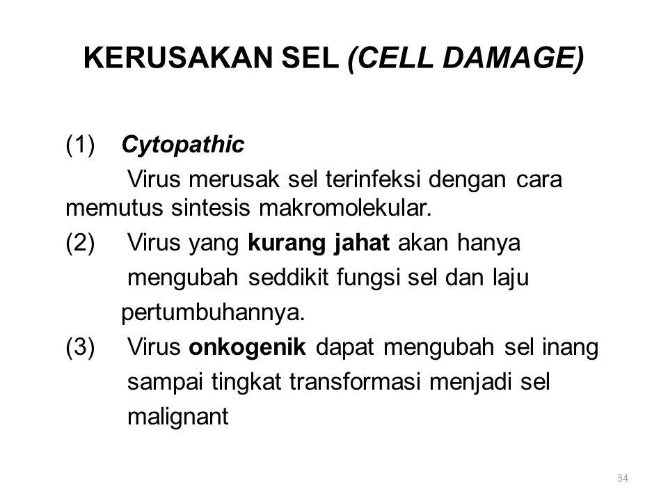 KERUSAKAN SEL (CELL DAMAGE) (1) Cytopathic Virus merusak sel terinfeksi dengan cara memutus sintesis makromolekular.