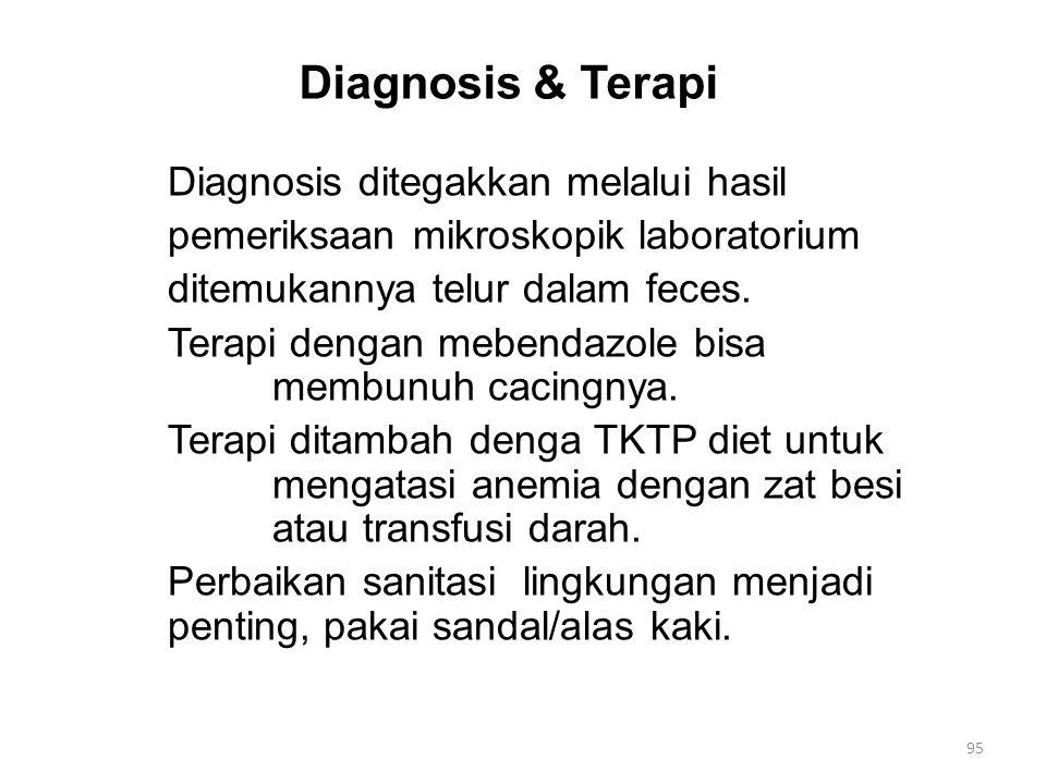 Diagnosis & Terapi Diagnosis ditegakkan melalui hasil pemeriksaan mikroskopik laboratorium ditemukannya telur dalam feces.