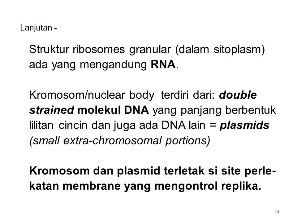 Lanjutan - Struktur ribosomes granular (dalam sitoplasm) ada yang mengandung RNA. Kromosom/nuclear body terdiri dari: double strained molekul DNA yang