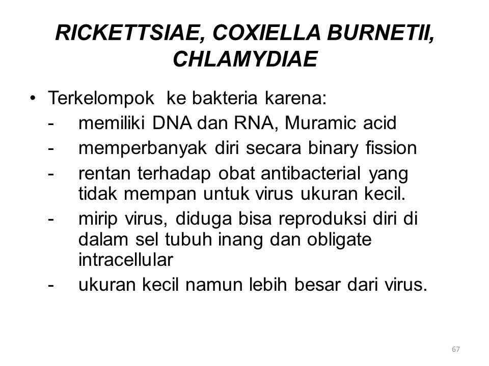 RICKETTSIAE, COXIELLA BURNETII, CHLAMYDIAE Terkelompok ke bakteria karena: -memiliki DNA dan RNA, Muramic acid -memperbanyak diri secara binary fissio