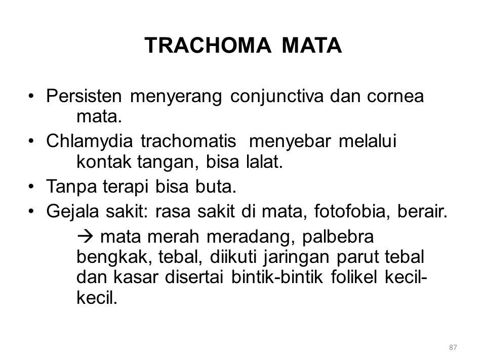 TRACHOMA MATA Persisten menyerang conjunctiva dan cornea mata. Chlamydia trachomatis menyebar melalui kontak tangan, bisa lalat. Tanpa terapi bisa but