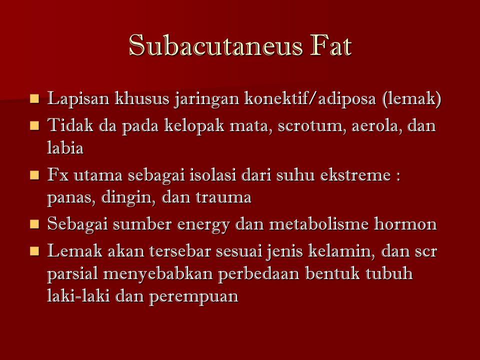 Subacutaneus Fat Lapisan khusus jaringan konektif/adiposa (lemak) Lapisan khusus jaringan konektif/adiposa (lemak) Tidak da pada kelopak mata, scrotum