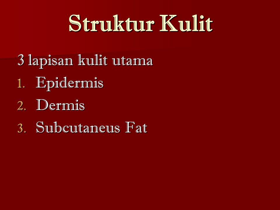 Struktur Kulit 3 lapisan kulit utama 1. Epidermis 2. Dermis 3. Subcutaneus Fat