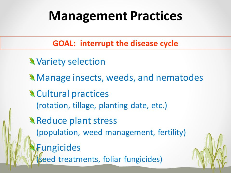 Management Practices Variety selection Manage insects, weeds, and nematodes Cultural practices (rotation, tillage, planting date, etc.) Reduce plant s