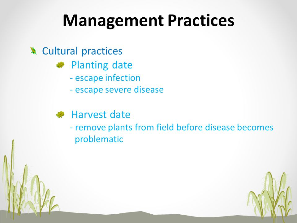 Planting date - escape infection - escape severe disease Harvest date - remove plants from field before disease becomes problematic Management Practices Cultural practices