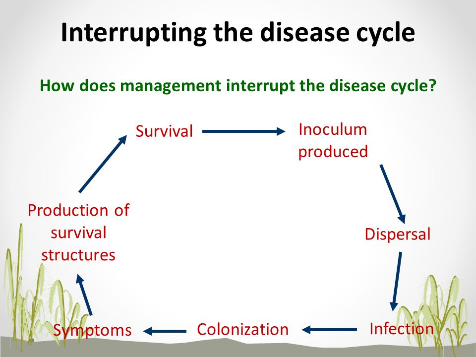 Survival Inoculum produced Dispersal Infection Colonization Symptoms Production of survival structures How does management interrupt the disease cycle.