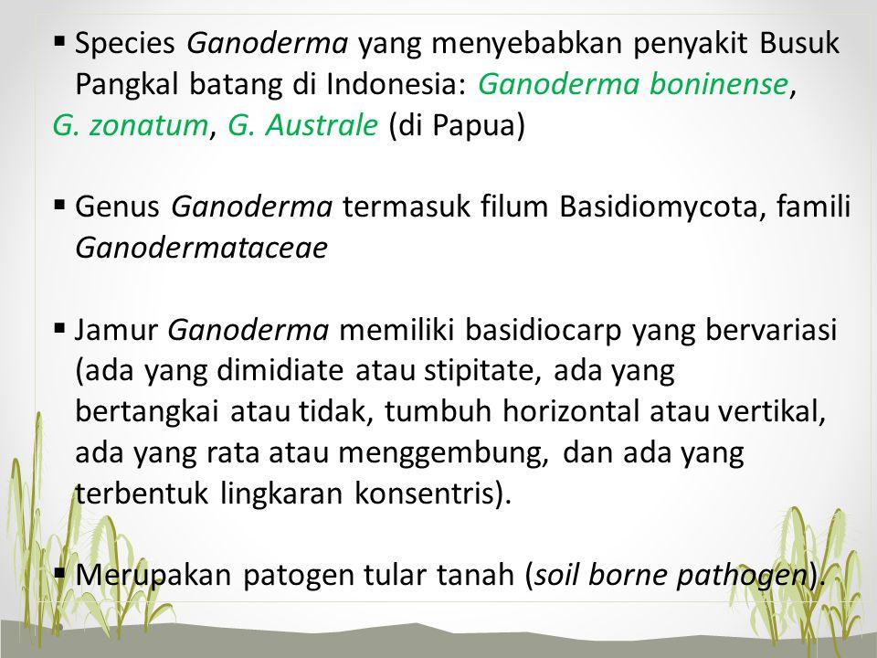  Species Ganoderma yang menyebabkan penyakit Busuk Pangkal batang di Indonesia: Ganoderma boninense, G. zonatum, G. Australe (di Papua)  Genus Ganod