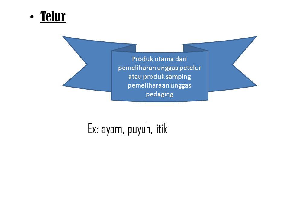 Telur Ex: ayam, puyuh, itik Produk utama dari pemeliharan unggas petelur atau produk samping pemeliharaan unggas pedaging