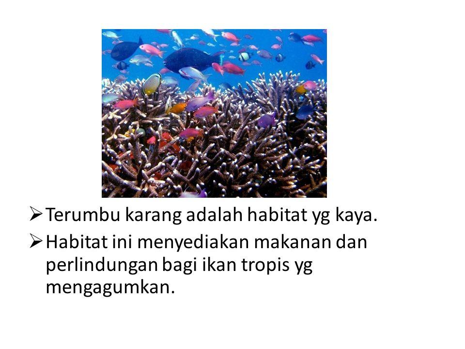  Terumbu karang adalah habitat yg kaya.  Habitat ini menyediakan makanan dan perlindungan bagi ikan tropis yg mengagumkan.
