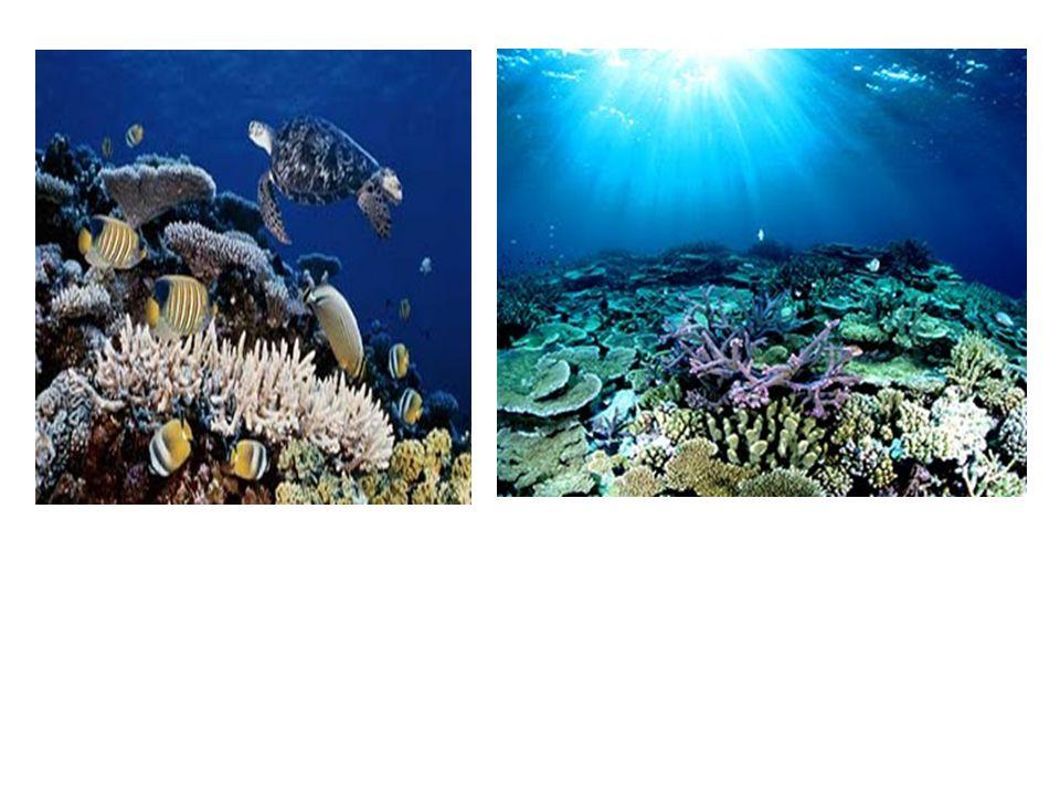 Terumbu Karang: Indonesia Indonesia diperkirakan memiliki terumbu karang seluas 60.000 km2.