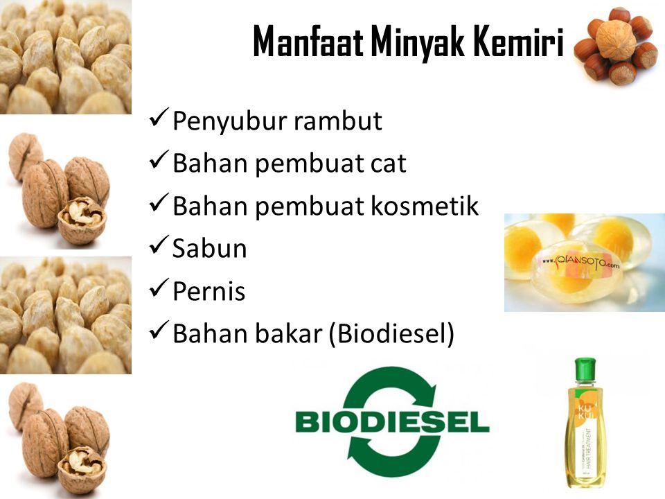 Manfaat Minyak Kemiri Penyubur rambut Bahan pembuat cat Bahan pembuat kosmetik Sabun Pernis Bahan bakar (Biodiesel)