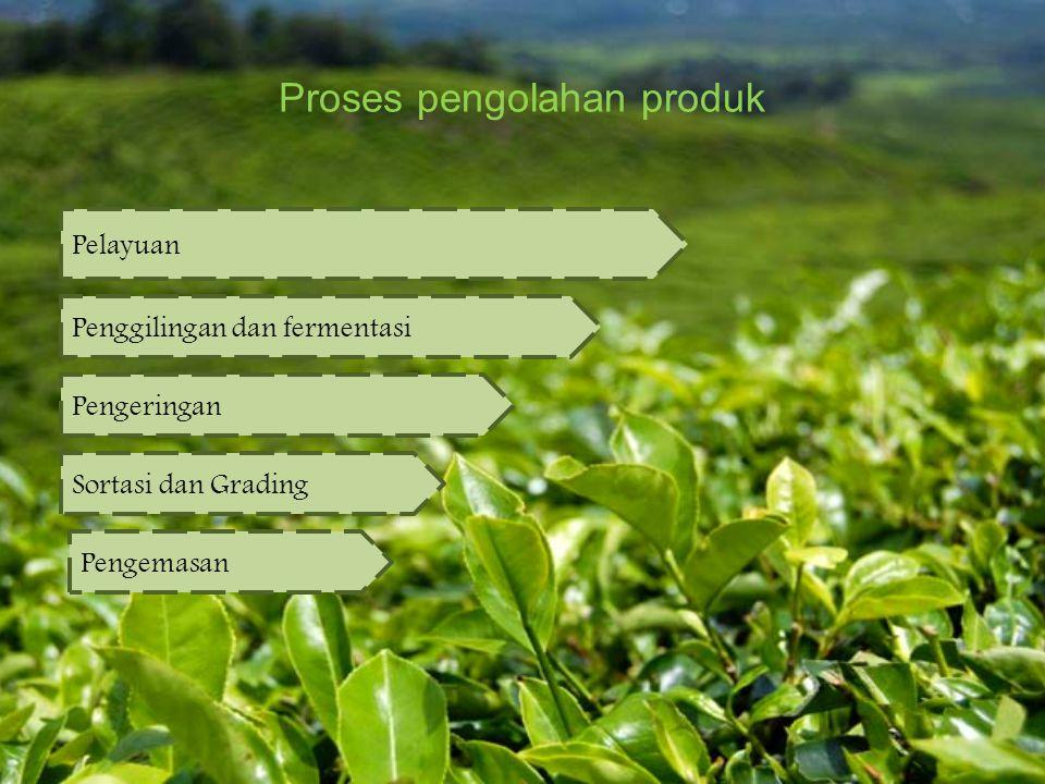 Proses pengolahan produk Pelayuan Penggilingan dan fermentasi Pengeringan Sortasi dan Grading Pengemasan