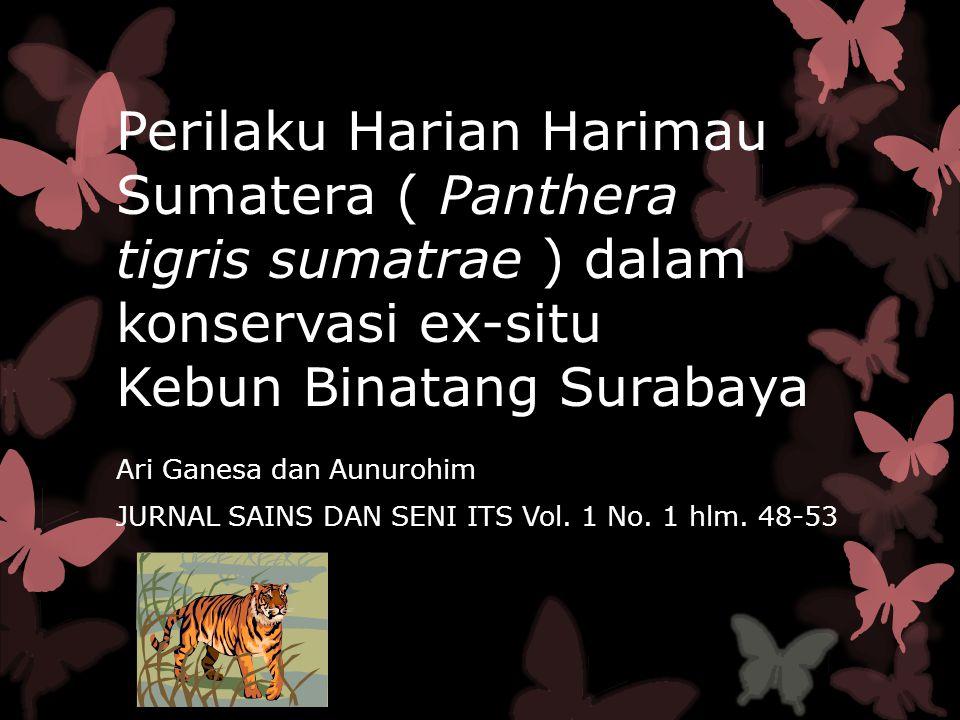 Klasifikasi Harimau Sumatra Kingdom : Animalia Phylum: Chordata Classis : Mammalia Ordo : Carnivora Famili : Felidae Genus : Panthera Species : Phantera tigris sumatrae