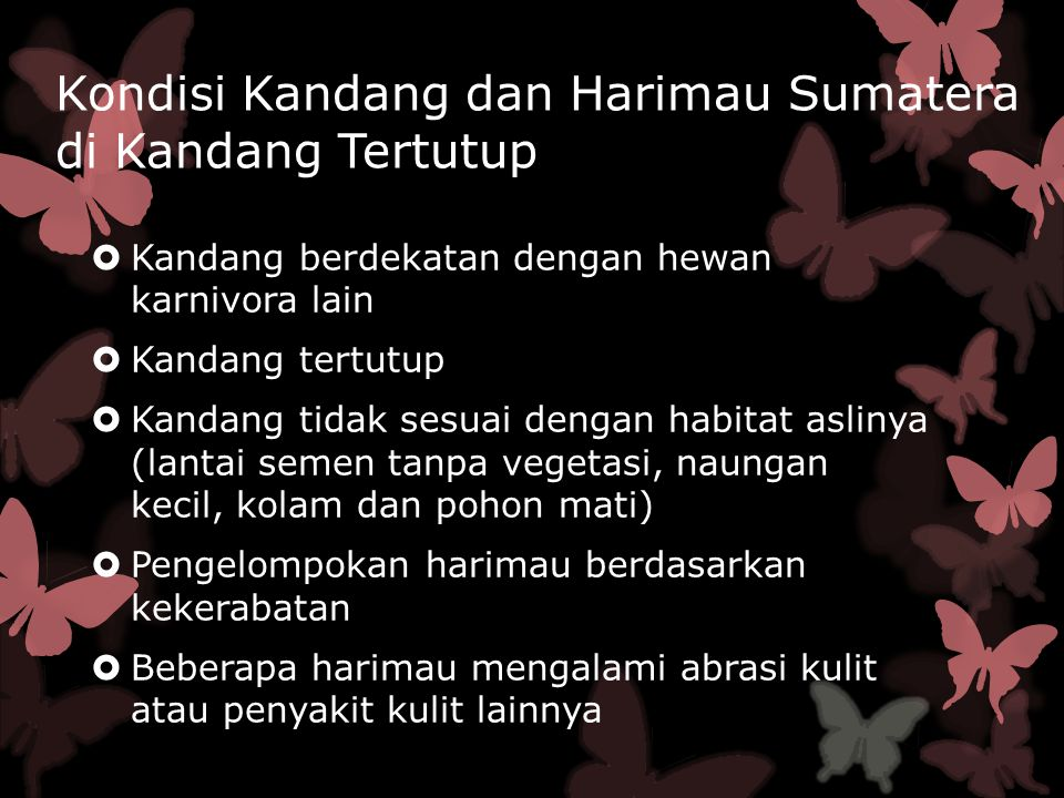 Perilaku Harimau Sumatra  Perilaku harian utama meliputi perilaku makan, istirahat, dan sosial.