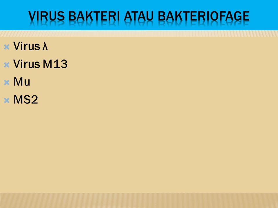  Virus λ  Virus M13  Mu  MS2