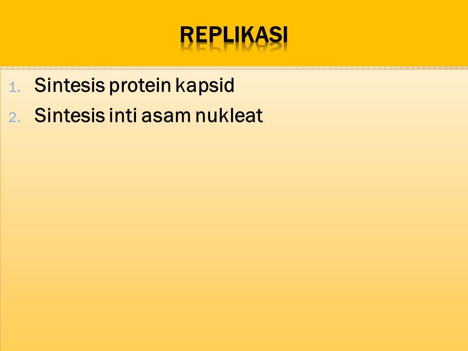 1. Sintesis protein kapsid 2. Sintesis inti asam nukleat 1. Sintesis protein kapsid 2. Sintesis inti asam nukleat