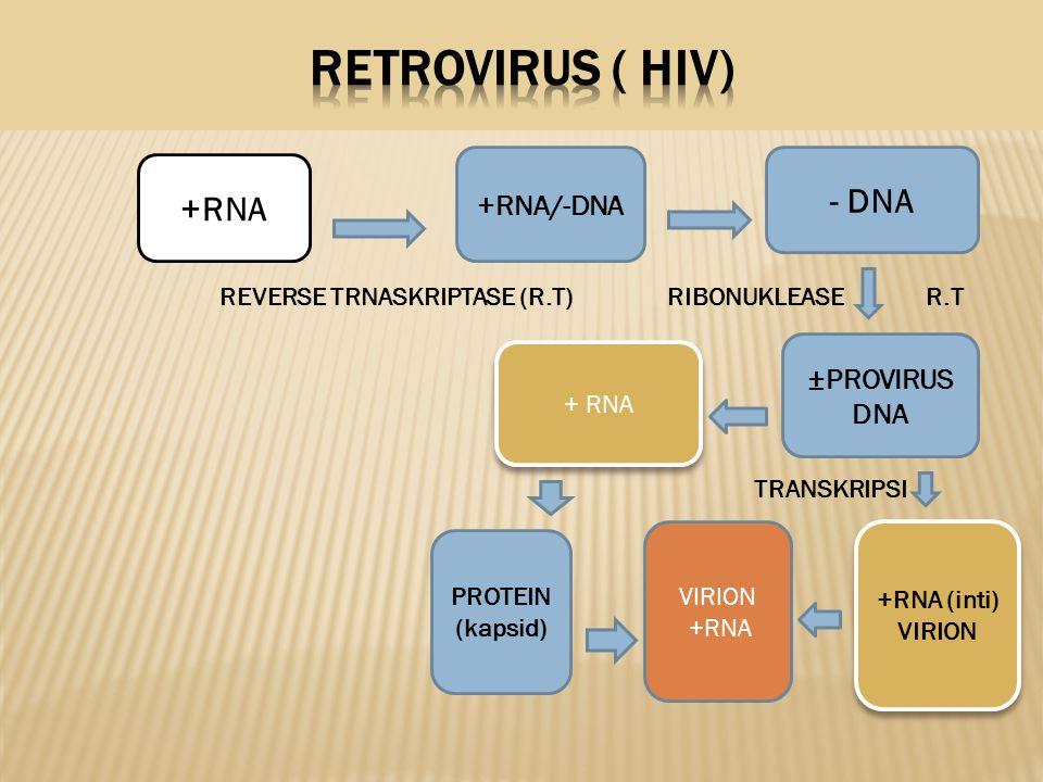 REVERSE TRNASKRIPTASE (R.T) RIBONUKLEASE R.T TRANSKRIPSI +RNA +RNA/-DNA - DNA ±PROVIRUS DNA +RNA (inti) VIRION VIRION +RNA PROTEIN (kapsid)