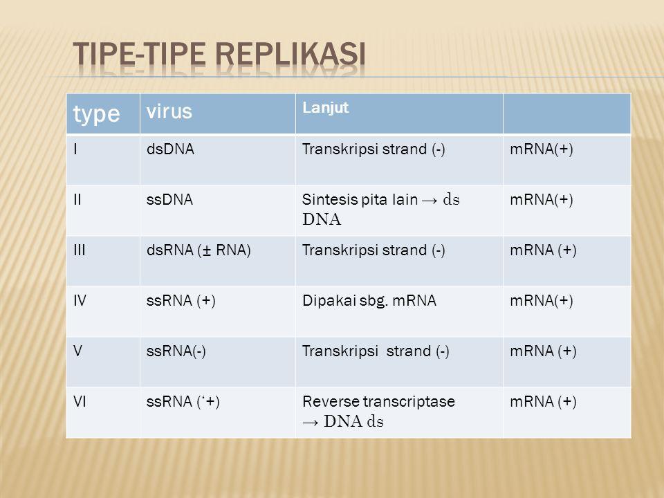 type V irus Lanjut IdsDNATranskripsi strand (-)mRNA(+) IIssDNA Sintesis pita lain → ds DNA mRNA(+) IIIdsRNA (± RNA)Transkripsi strand (-)mRNA (+) IVss