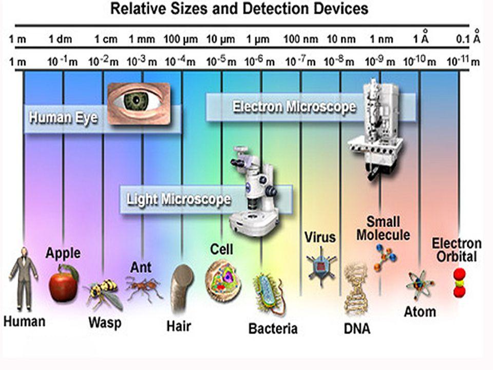  Setelah DNA dinjeksikan ke sel iang, sintesis DNA,RNA dan protein inang dihentikan, dan sel dipacu utk mensisntesis konstituen virus.