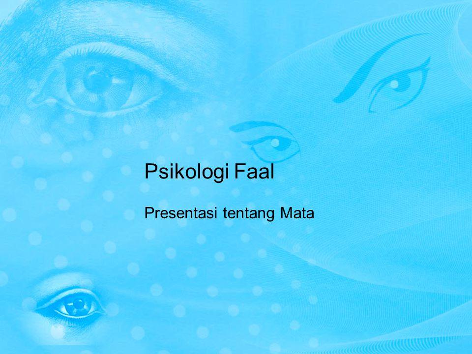 Mata Mata merupakan salah satu alat indera yang sangat istimewa.