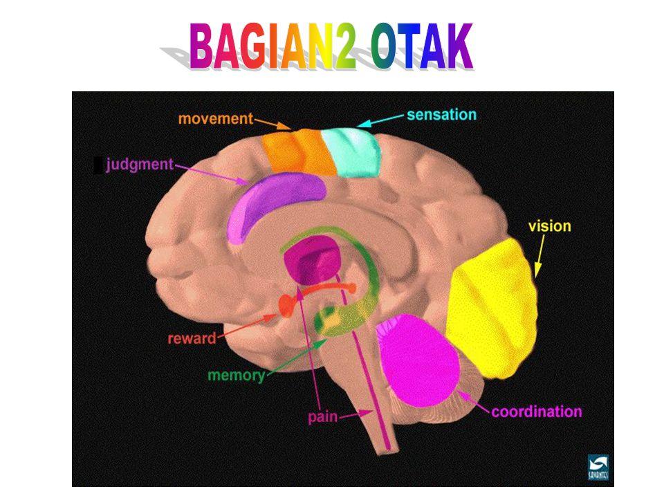 SISTEM SARAF PUSAT OTAK  Otak Besar (Cerebrum)  Otak Kecil (Cerebellum)  Batang Otak (Mid Brain)  Dienchepalon  Mesenchepalon  PONS  Medula Obl