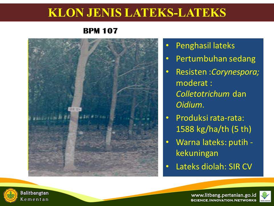 Bunga Penghasil lateks Pertumbuhan jagur Resisten : Corynespora Colletotrichum & Oidium Lateks: 1.5-2.5 ton/ha/th Warna : putih kekuningan Lateks diolah: sheet PB 260 KLON JENIS LATEKS-LATEKS