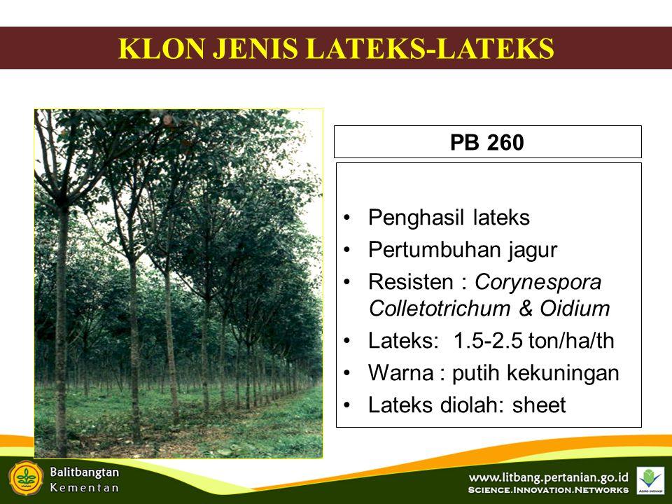 IRR 21  Lateks-kayu  Pertumb cepat, MS 4 th (48.5 cm)  Lilit batang (J) 4.5 th : 34.2 cm  Lilit batang 18 th (SS) : 103 cm  log : 0.17 m 3 /p (59.5 m 3 /ha)  Produksi lateks : 4.7 kg/p/th (1610 kg KK/ha/th ) KLON JENIS LATEKS-KAYU