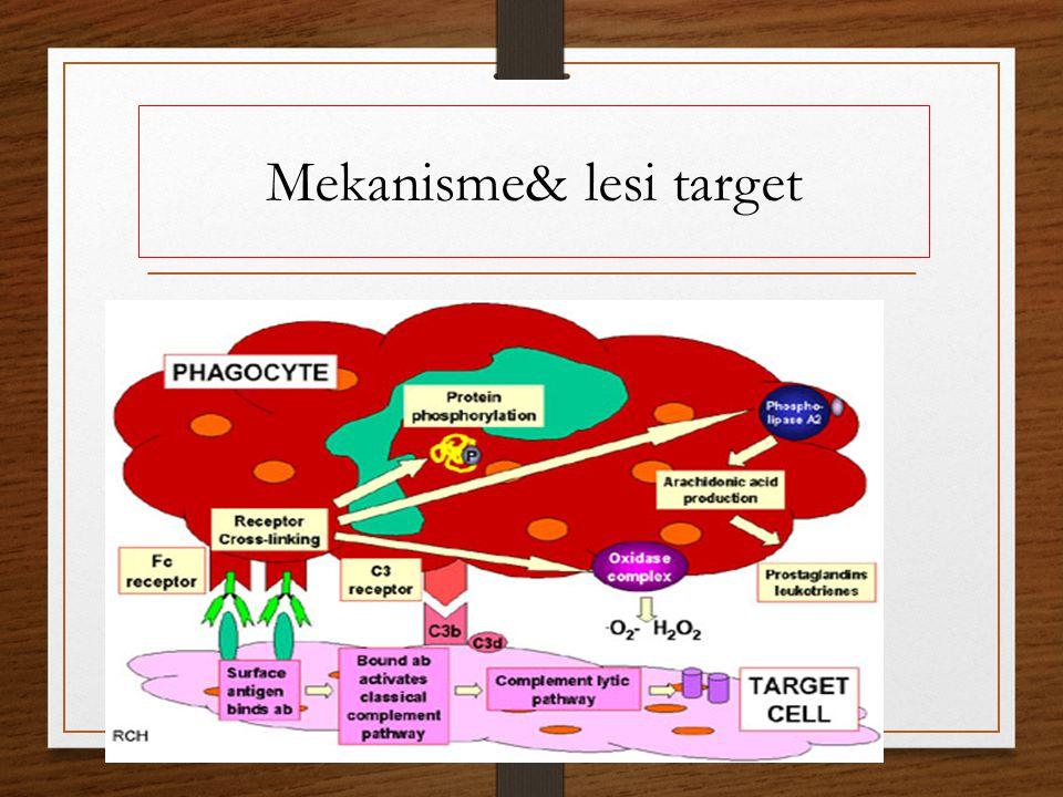 Mekanisme& lesi target Mengandung: antibodi, komplemen, neutrofil Obat: anti infalmasi