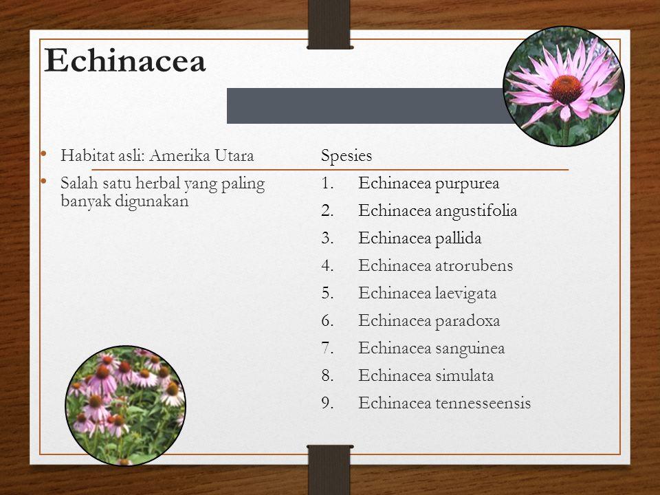 Echinacea Habitat asli: Amerika Utara Salah satu herbal yang paling banyak digunakan Spesies 1.Echinacea purpurea 2.Echinacea angustifolia 3.Echinacea