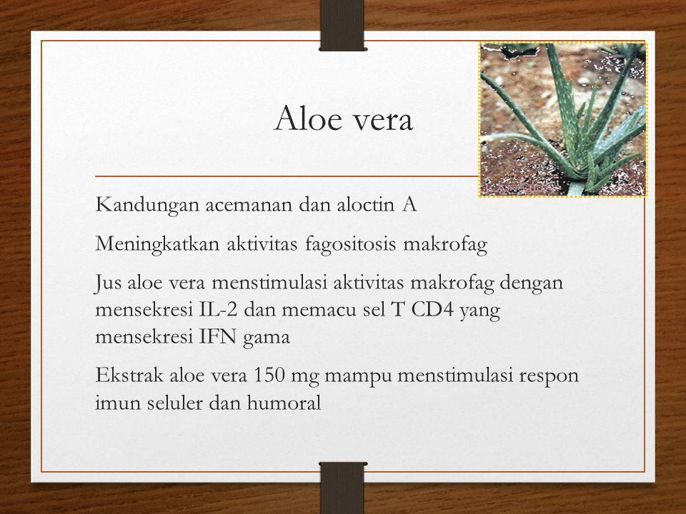 Aloe vera Kandungan acemanan dan aloctin A Meningkatkan aktivitas fagositosis makrofag Jus aloe vera menstimulasi aktivitas makrofag dengan mensekresi