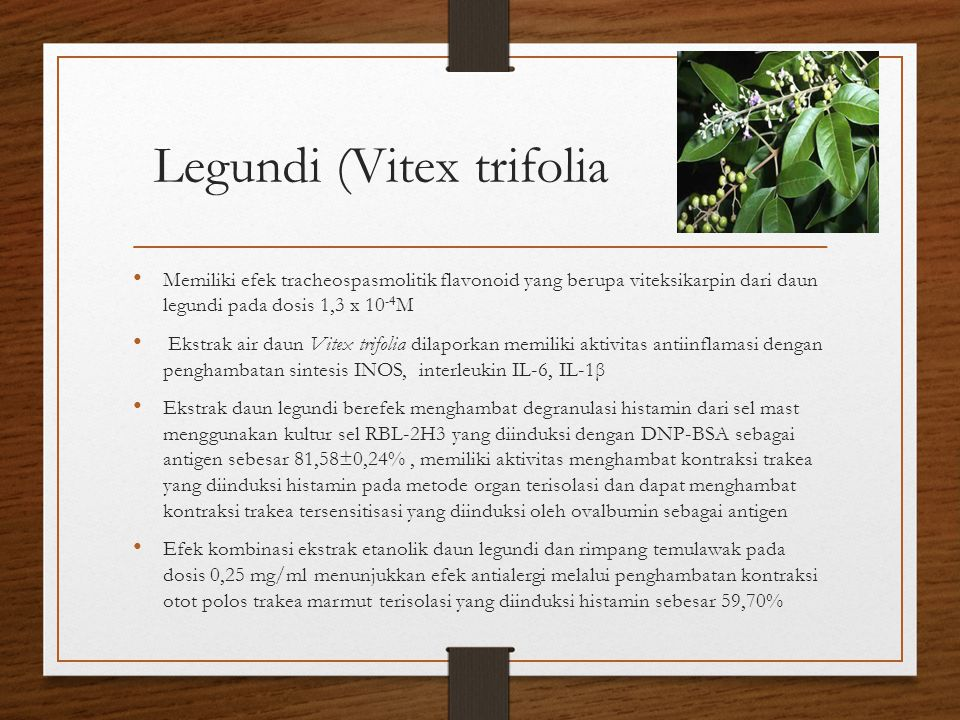 Legundi (Vitex trifolia Memiliki efek tracheospasmolitik flavonoid yang berupa viteksikarpin dari daun legundi pada dosis 1,3 x 10 -4 M Ekstrak air da